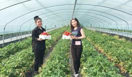 Các công việc làm thêm ở Hàn Quốc được du học sinh yêu thích