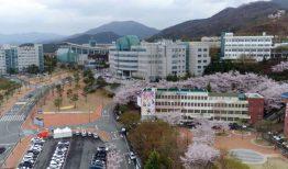 Thông tin về các ngành đào tạo của đại học Daegu Hanny