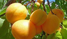 Từ vựng Tiếng Hàn chủ đề các loại trái cây